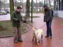 Hunde lernen sich kennen