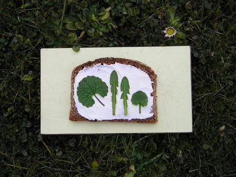 Brettchen im Gras